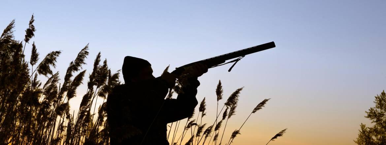 shotgun-hunting.jpg