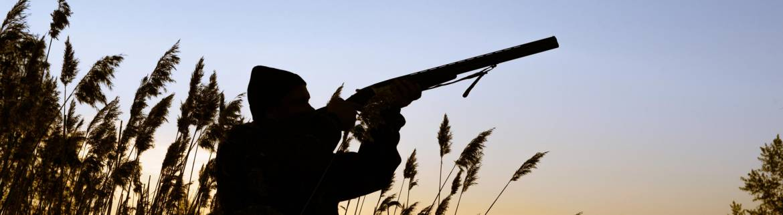 shotgun-hunting2.jpg